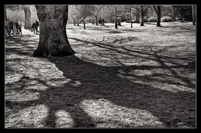 Bushy Park 1-1