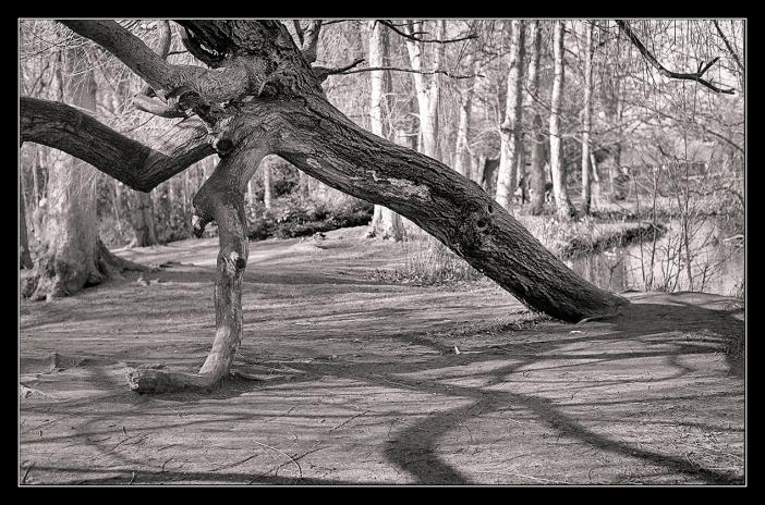 Bushy Park trees-10
