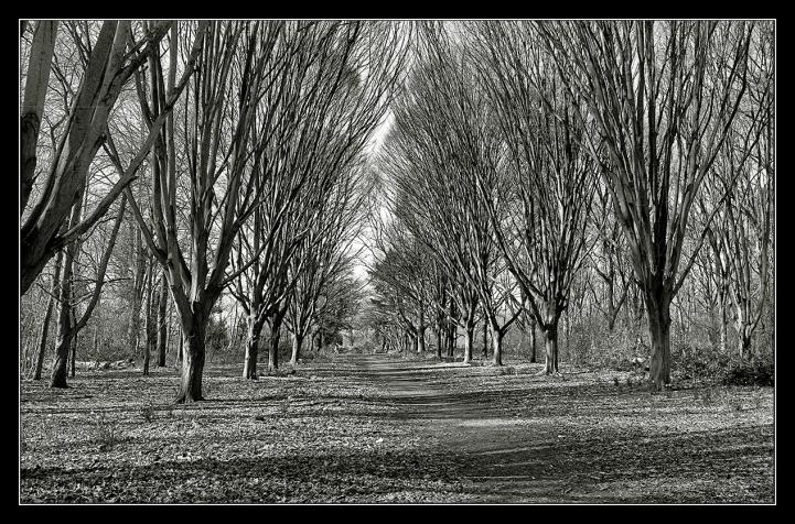 Bushy Park trees-3