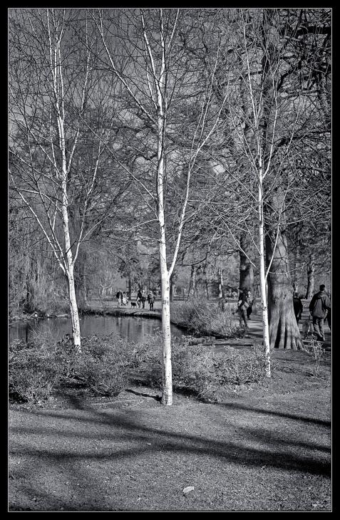Bushy Park trees-8