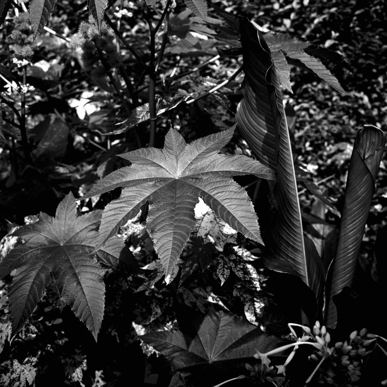 Garden at HamptonCourt